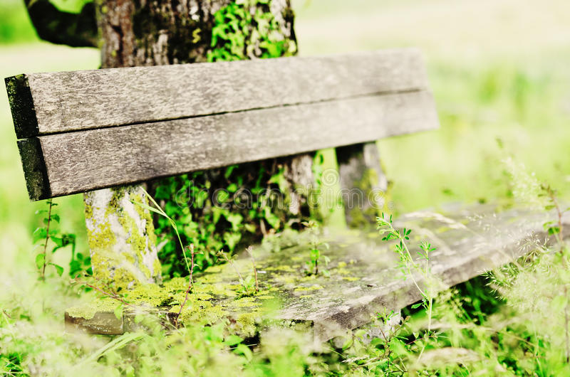 Download Bench stock image. Image of grass, tree, vintage, seat - 26036555