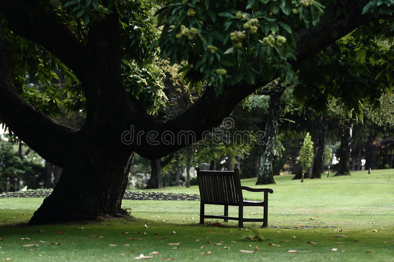 Download Bench stock image. Image of park, autumn, peace, peaceful - 27619951