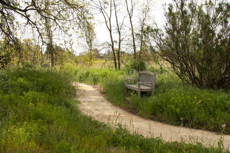 Download Bench stock image. Image of place, shade, backyard, walk - 4845337