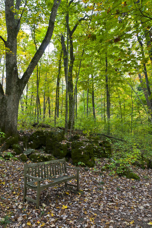 Download Bench in autumn forest stock photo. Image of beauty, field - 27251742