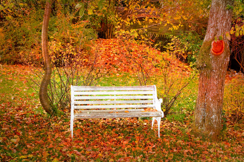 Bench in autumn forest. White bench in autumn forest with trees and leaves in background royalty free stock photo