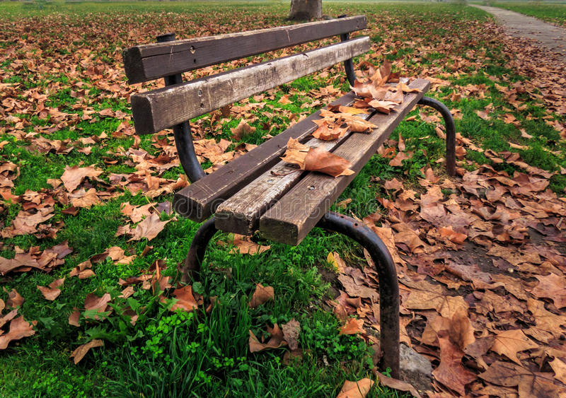 Bench in autumn royalty free stock images