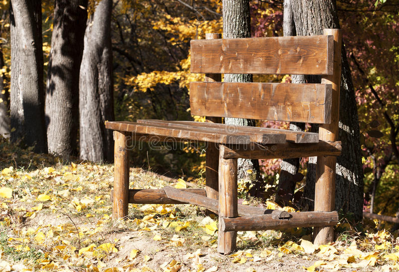 Bench in autumn. Wooden bench in autumn near trees in the sun royalty free stock image