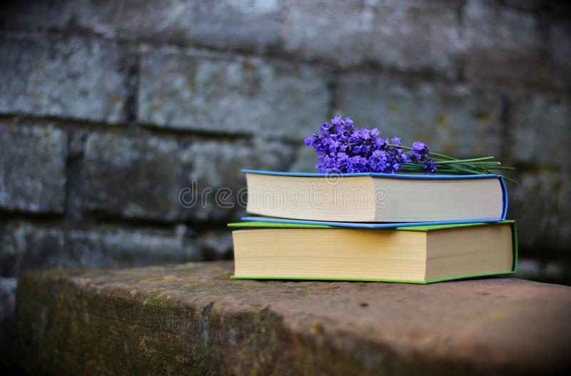 Bench, Blur, Books royalty free stock images