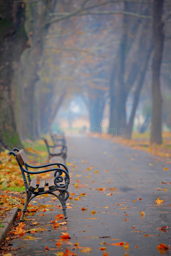 Bench in a city park stock image