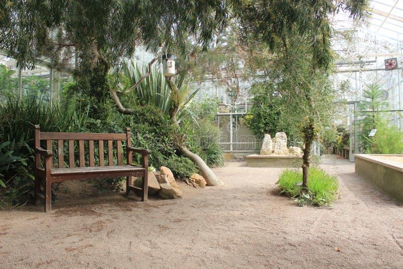 Bench dentro una serra nel giardino botanico di Gothenburg, Svezia fotografia stock libera da diritti