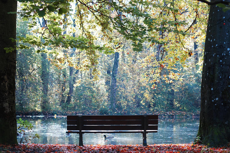 Bench with a duck royalty free stock photos