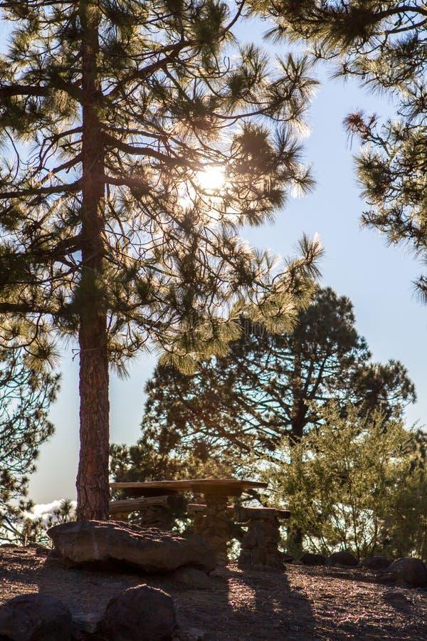 Bench en altas nubes sobre bosque del pino en Tenerife imagen de archivo libre de regalías