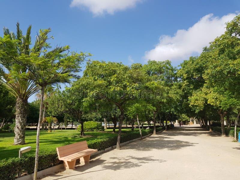 Bench en parque soleado de la ciudad con la hierba verde, los árboles y la trayectoria imagenes de archivo