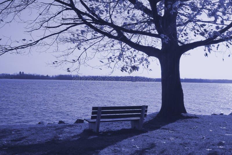 Download Bench ensamt arkivfoto. Bild av fall, reflexion, trees - 519230