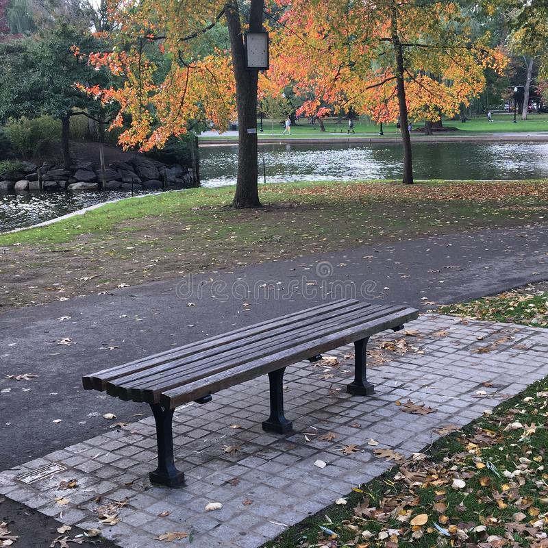 A bench with a fall view. A lone bench offers a view of the fall foliage on a rainy day in Boston Public Garden stock images