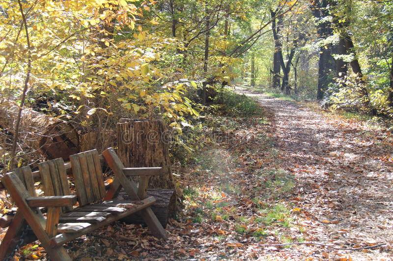 Bench for a fall walk royalty free stock image