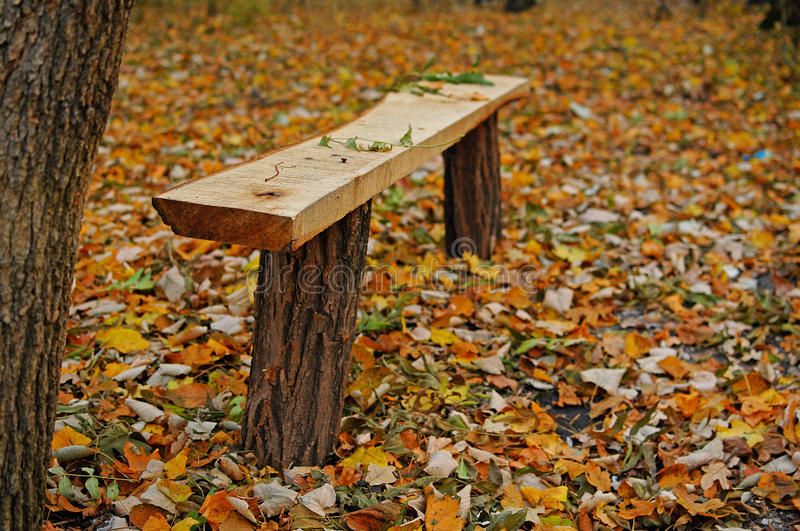 Bench in forest stock photo