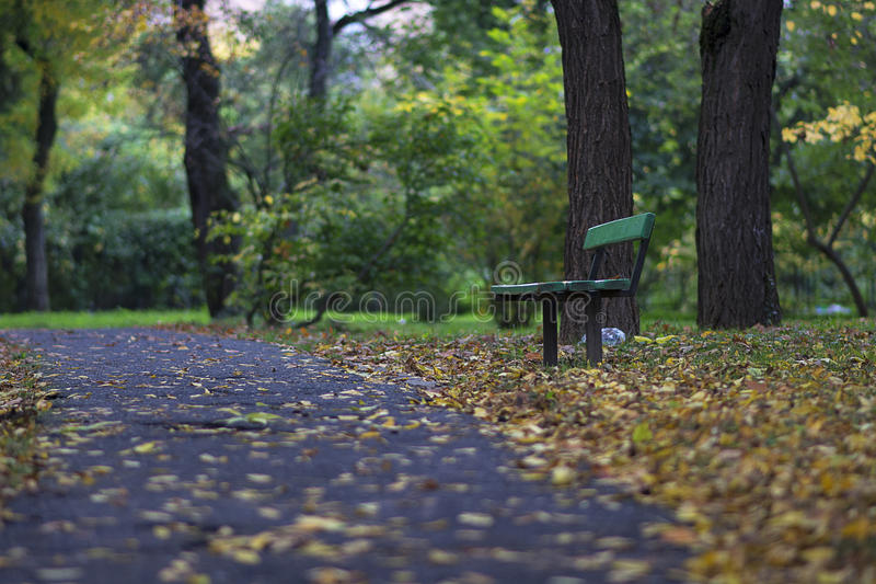 Bench in a forest stock image