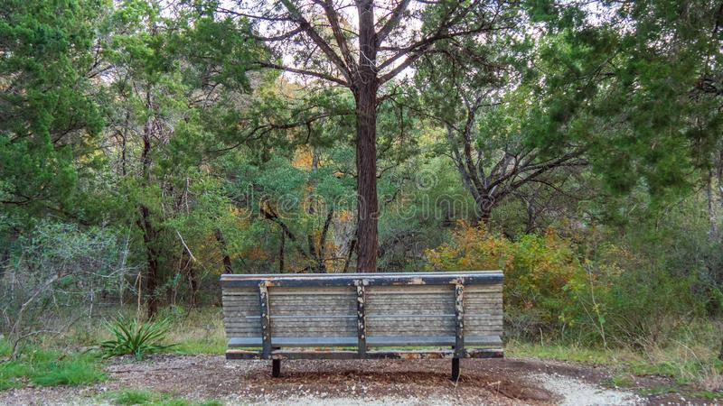 Bench in forest trail park facing a single tree growing just in front of it, with forest further away royalty free stock images