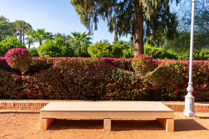 Bench in front of Flowering Plants at Cyber Park in Marrakesh Morocco. A stone bench in front of flowering plants among the gardens of Cyber Park in Marrakesh royalty free stock photos