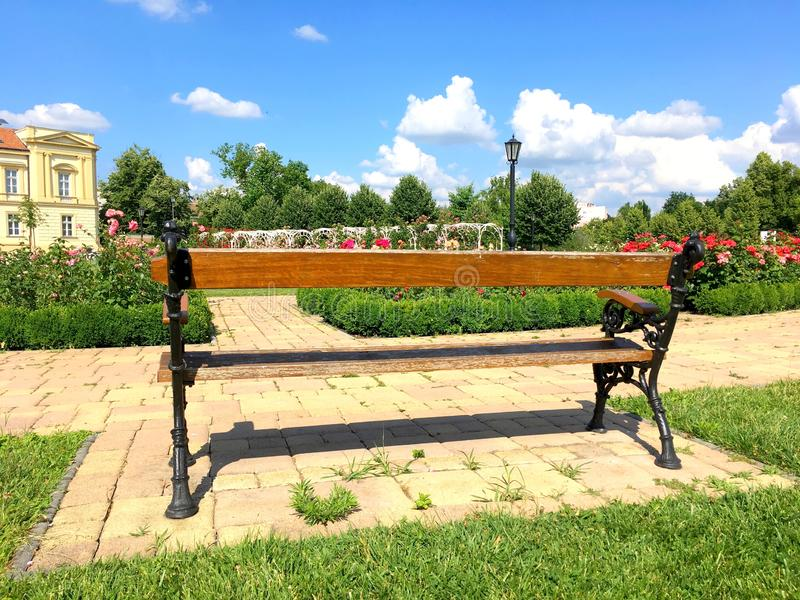Bench among roses royalty free stock image