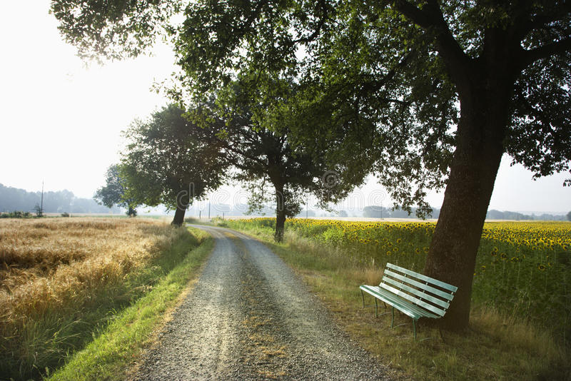 Bench and Gravel Road in the Country royalty free stock images