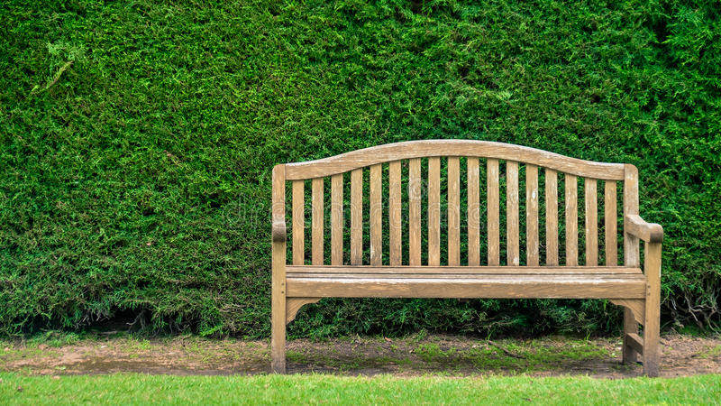 Bench with green pine bush. On the background royalty free stock photo