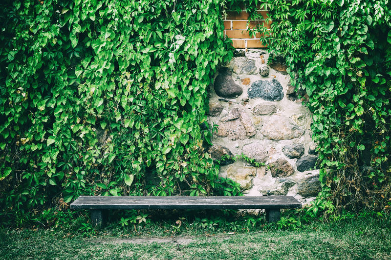 Bench near old stone wall covered with ivy leaves. Wooden bench near old stone wall covered with ivy leaves royalty free stock photography