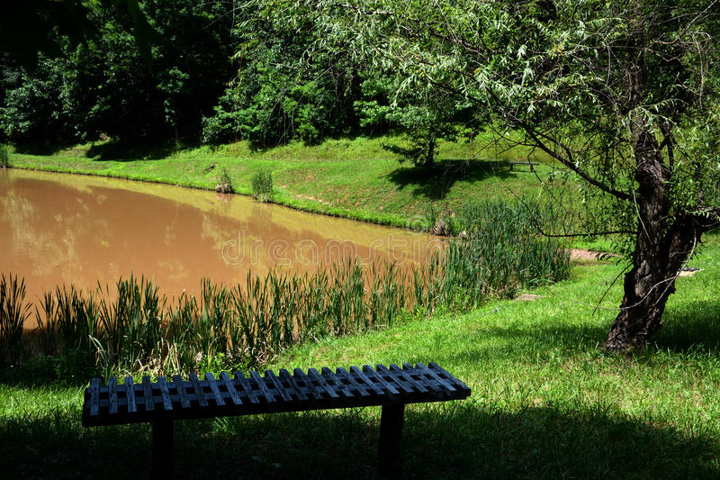 Bench overlooking pond royalty free stock photos