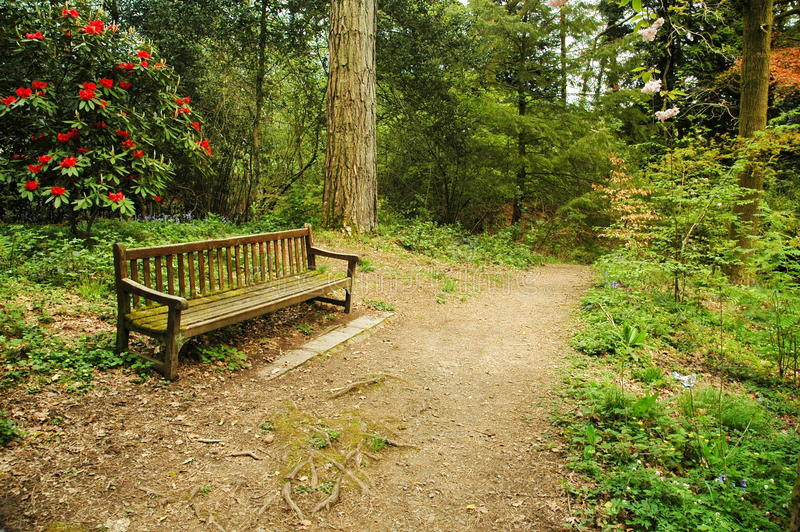 Download Bench in park stock photo. Image of bench, bushes, trees - 12994454