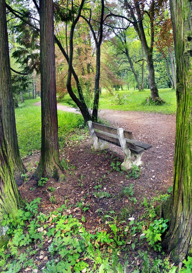 Download Bench in the park stock photo. Image of forest, bench - 14250838