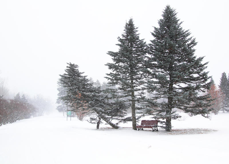 Download Bench in a park stock image. Image of cold, winter, firs - 23473723