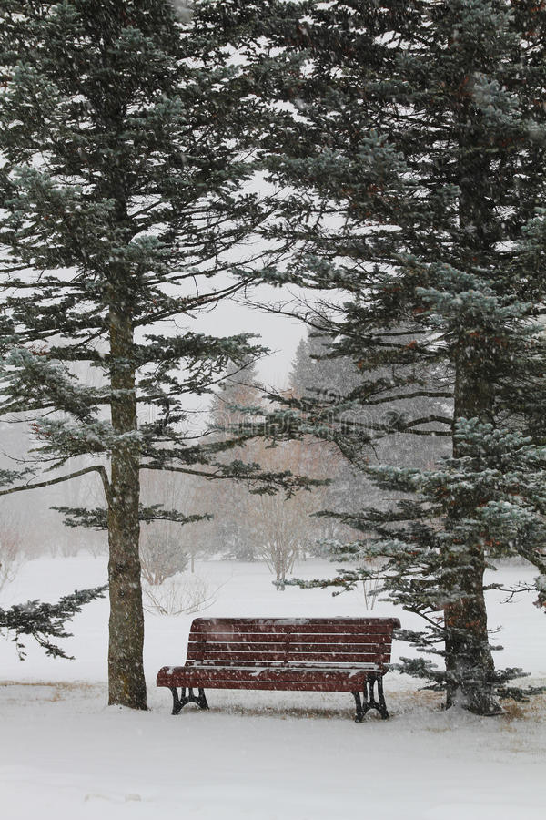 Download Bench in a park stock photo. Image of bench, frozen, season - 23473762