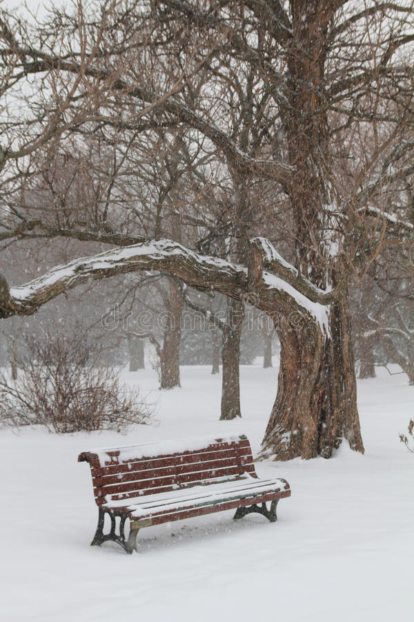 Download Bench in a park stock image. Image of snow, bench, snowfall - 23506295
