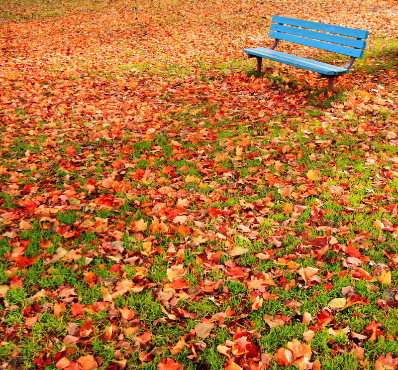Bench park autumn leaves royalty free stock photos