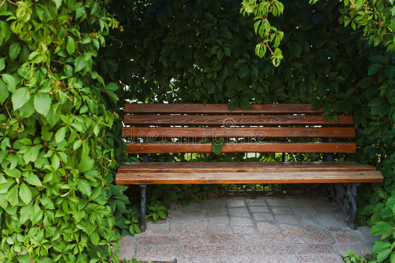 Bench in the park royalty free stock image
