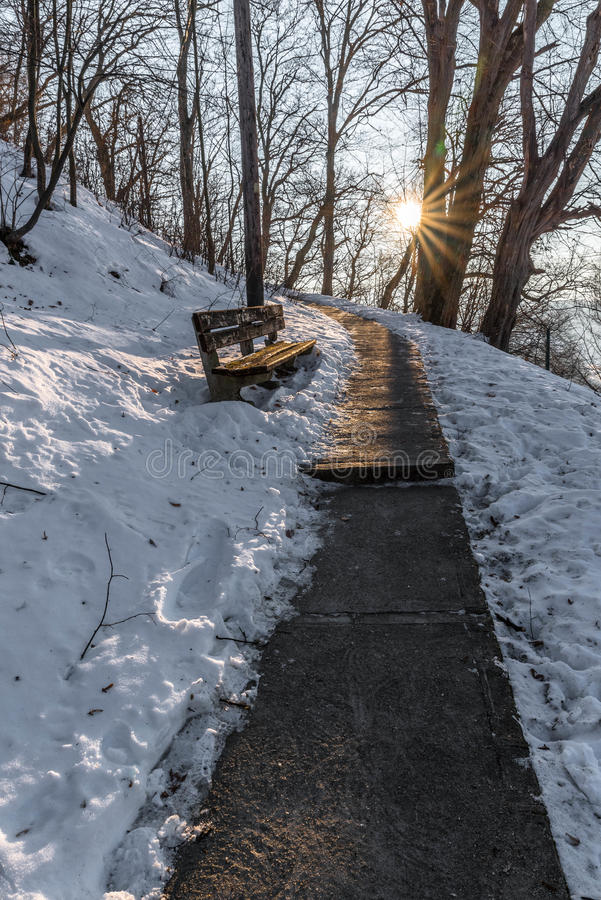 Download Bench On A Path In The Park Stock Photo - Image of people, lonely: 84646688