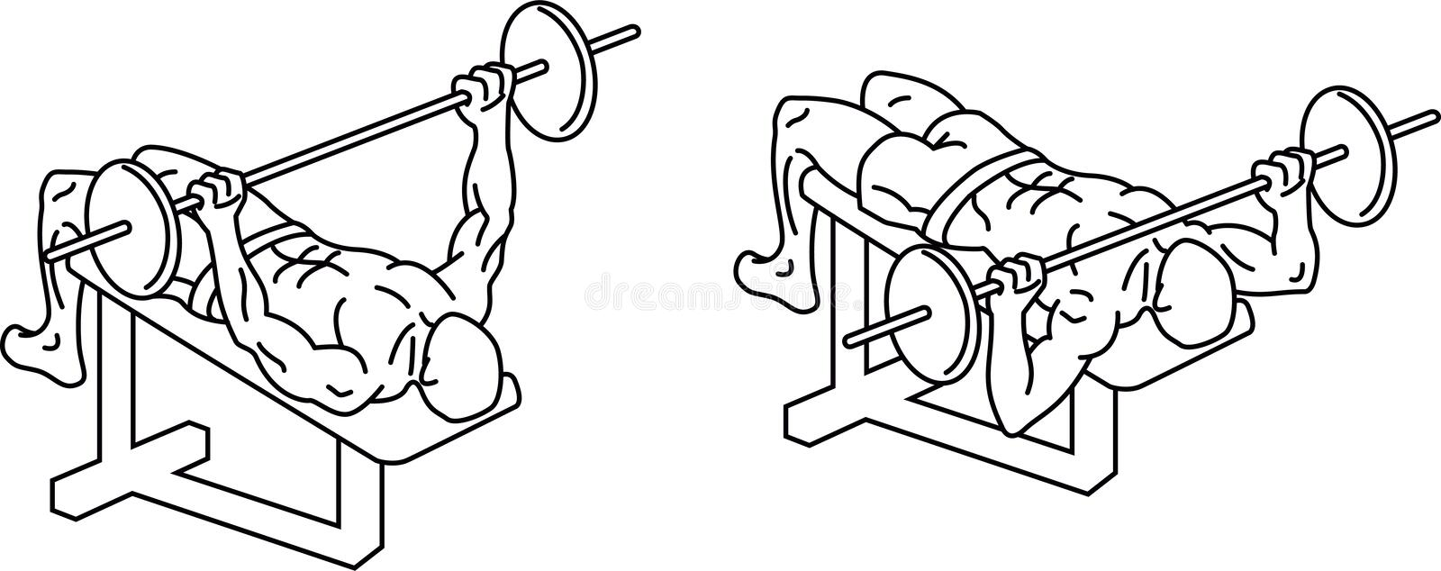 Bench press. Exercises and training with weights royalty free illustration