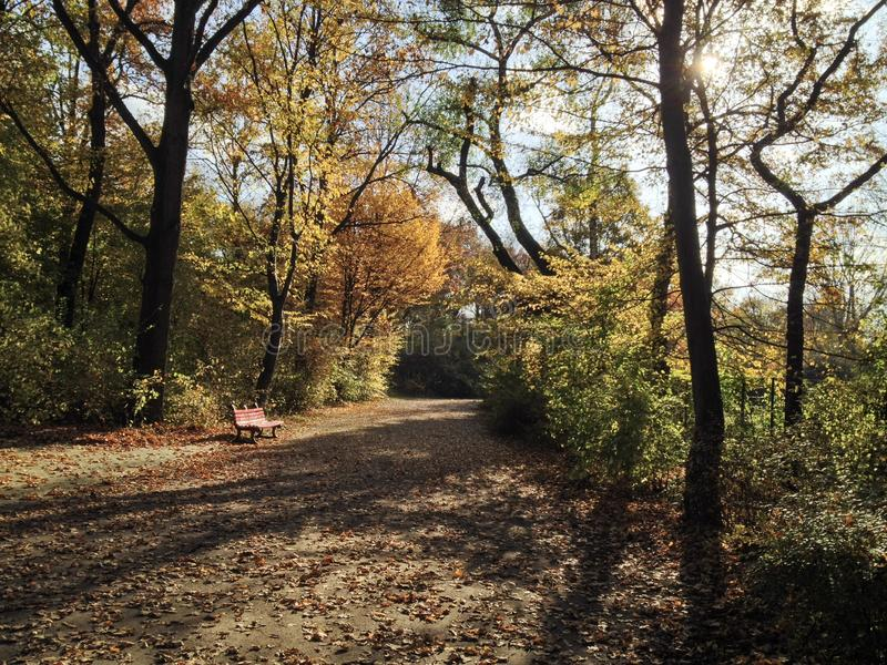 Bench in Puplic Park Hasenheide in Berlin in Autumn / Fall. Path and trees are covered in beautiful coloured leaves. Sunny royalty free stock photos