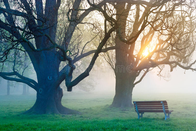 Bench under the aok tree. Wooden bench under trees in the foggy morning light, spring garden Stromovka in Prague, Czech republic royalty free stock photo