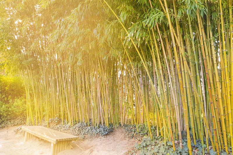 Bench under the thickets of bamboo in the sun. Rays stock images