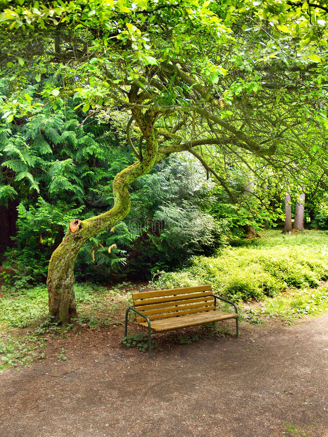 Bench Under Tree In Park Stock Photos