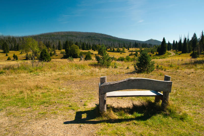 Download Bench with a view stock photo. Image of forest, environment - 21279216