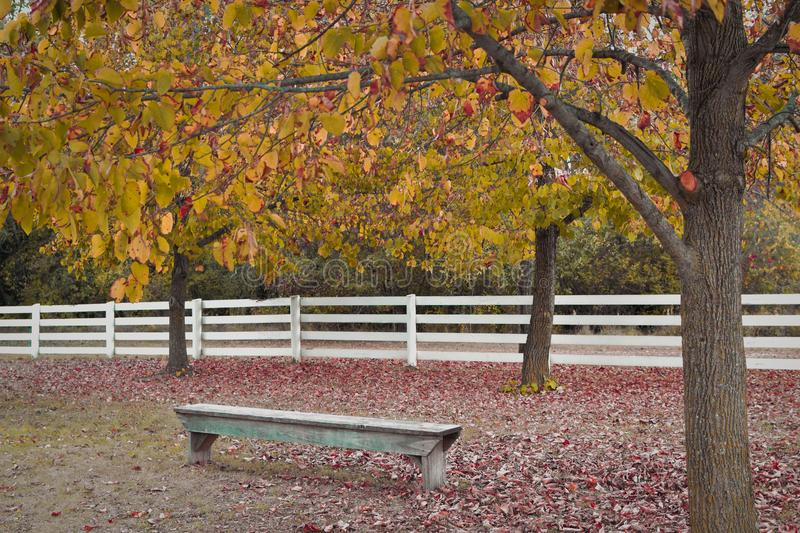 Bench with White Fence Fall Leaves stock photography
