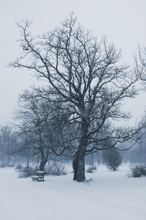 Download Bench in winter stock image. Image of snow, snowstorm - 22982377