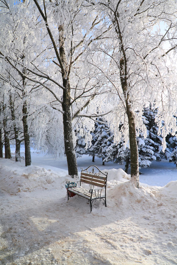 Download Bench in winter park stock photo. Image of forest, overcast - 16968316