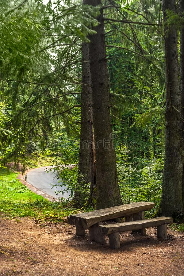 A bench and a wooden table seen in a cedar and fir trees forest. A road seen in the backgroud royalty free stock images