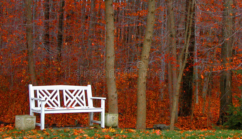 Download Bench in the Woods stock photo. Image of quiet, trees, alone - 44578