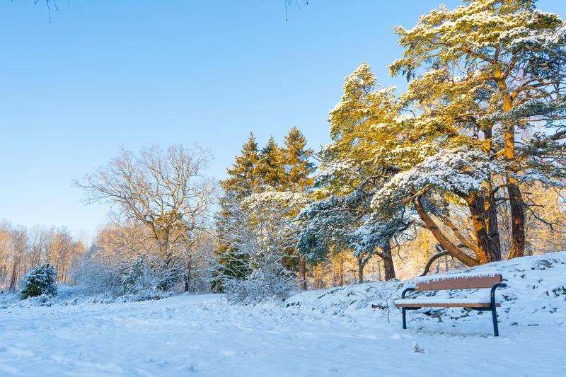 Bench in the woods near Stockholm. Scandinavian winter. Swedish nature wallpaper. Background royalty free stock images