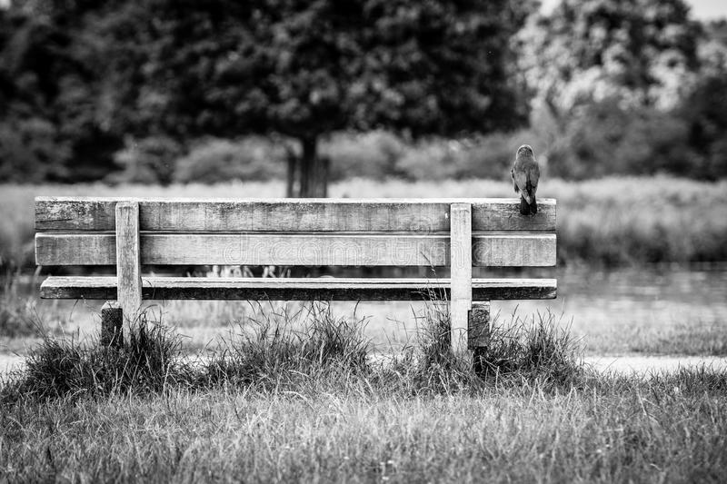 Benched royalty free stock image