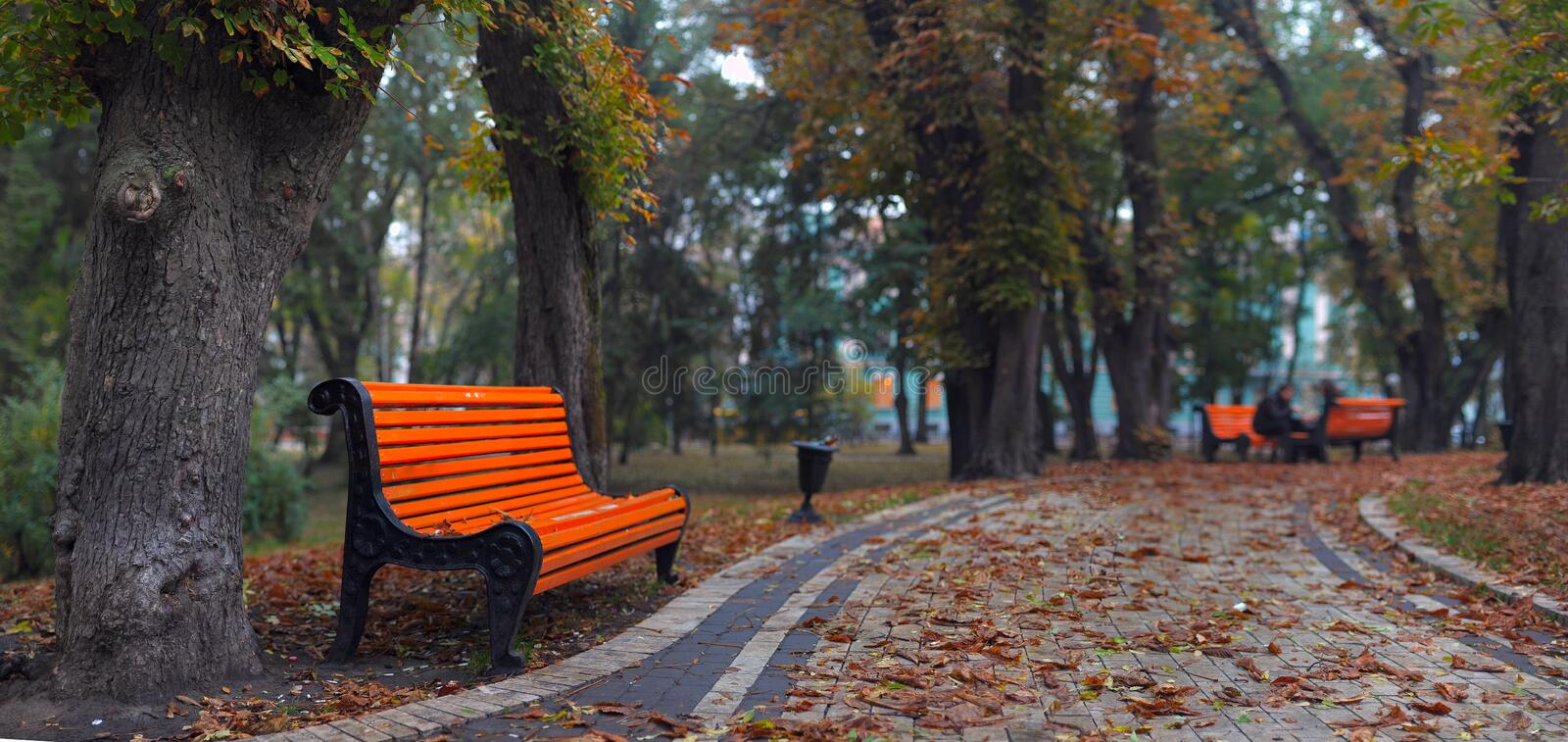 Download Benches in city park stock image. Image of cloudy, down - 11447123