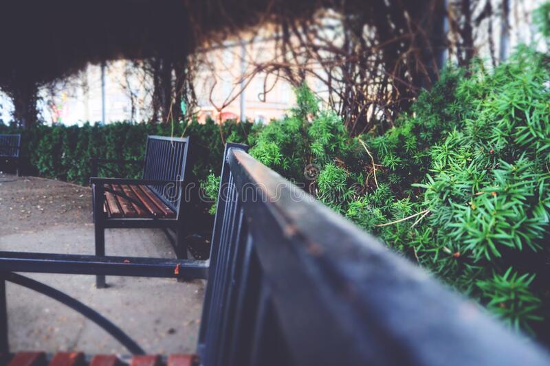 Benches in a garden royalty free stock photography