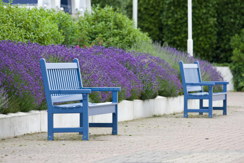 Benches and lavender, Deauville. Blue benches and lavender near the beach of Deauville, France royalty free stock image