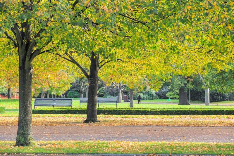 Benches no Parque Regente de Londres no outono imagens de stock royalty free